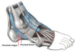 Peroneal Tendonitis Causes Symptoms Amp Treatment