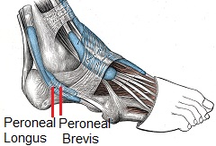 Inflammation or degeneration of the peroneal tendons can cause inner ankle pain