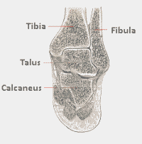 View of the back of the ankle joint and heel bone