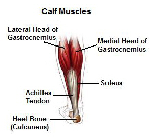 How to increase my calf size 12
