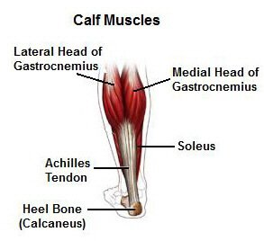 Stretching Exercises for Soleus and Calf Muscles