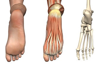 Foot Anatomy: Find out about the different structures of the foot including ligaments, bones & muscles