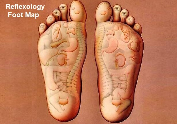 reflexology foot map - showing how the different body parts are represented  on the feet