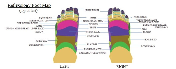 Reflexology foot map showing the tops of the feet