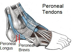 Peroneal tendonitis is another common cause of lateral foot pain