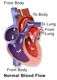 If there is a problem with how the heart pumps, fluid seeps out of the blood vessels into surrounding tissues and can cause foot and ankle swelling