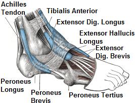 Foot Tendon Diagram.Foot Ankle Tendonitis Causes Symptoms Treatment Knee