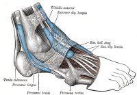 Inflammation of the tendons is known as tendonitis and is one the common causes of foot pain