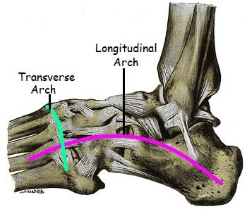 Normal arches of the foot, the longitudinal arch and the transverse arch which work together to support the foot
