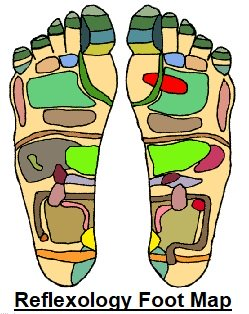 A reflexology foot map